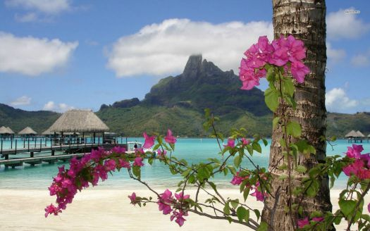 Good Golly Bora Bora