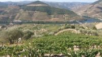 The Douro vineyards, Portugal