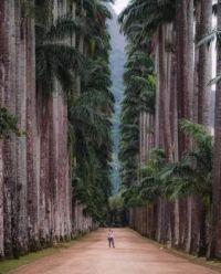 Botanical Park of Rio de Janeiro Brazil.  5820