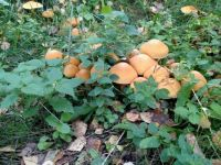 Mushrooms in a Lithuanian forest 2