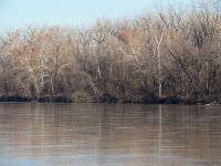 Kaw River Bank