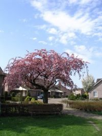 Bloesem/voorjaar