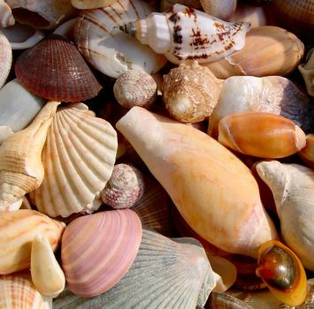 She sells seashells