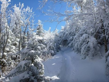 Tennessee-Winter Trail In Smokey Mountains