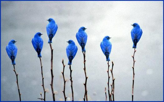 Bluebirds on Sticks
