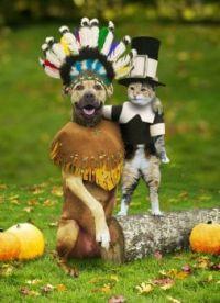 animal pilgrims