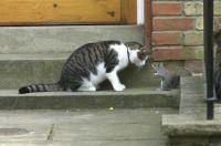 Cat & Squirrel Chat