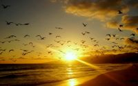 birds-beach-landscape-sunset-flying-1080P-wallpaper