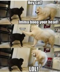 Imma BOOP your head.