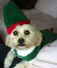 Jazzy Elf