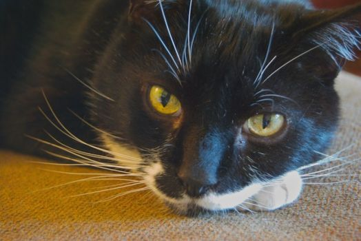 Theme - Cats:  My daughter's rescue cat, Peet