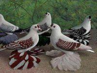Lovely doves