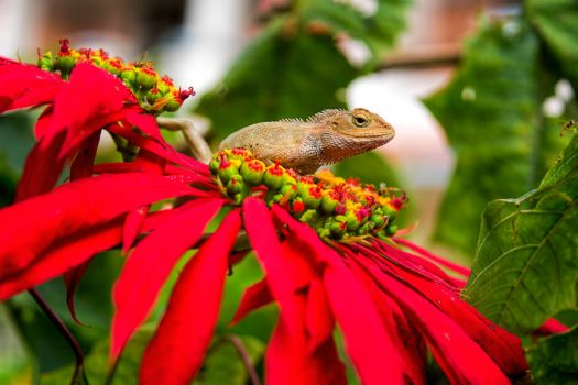 Lizard among the flowers
