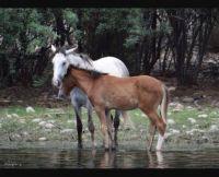 Salt River Horses 2018