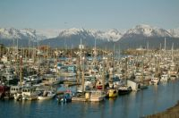 Homer~Alaska~The Real Harbour