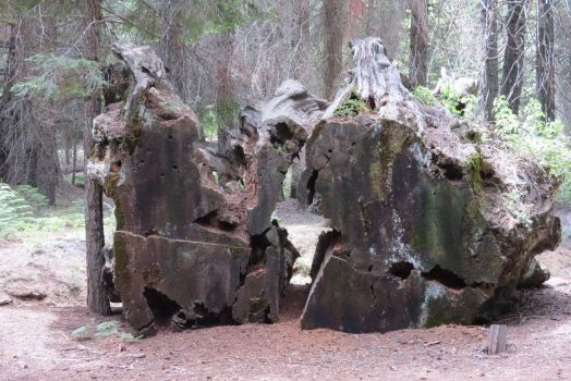 A Relic Of Lumbering Days In The Sequoias