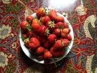 Strawberries from my allotment