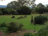 Worrigee.  Visitors in the front yard