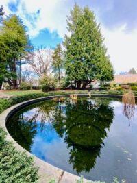 Lily pond , Volunteer Park, Seattle