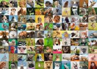 Collage animales
