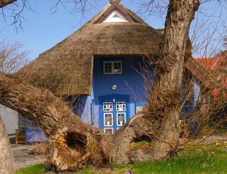 Cottage behind odd trees, Ahrenshoop, Germany, by pixelchecker (pic cropped)