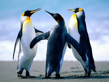 Penguindance