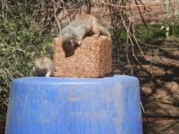 Squirrels in my back yard
