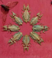 Leafbugs