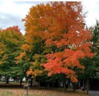 More Beautiful Trees