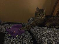 Petey loves his purple kitty