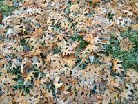 frosty-fall-leaves