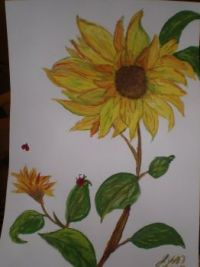 165  2012 SUNFLOWER