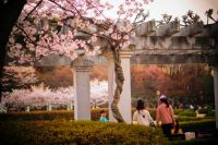 spring-KyungHee University-Korea