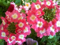 rings of flowers
