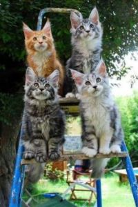 Colourful kitties