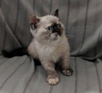 Susie Q at 9 weeks.
