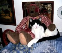 Lilly the cat with her teddy bear