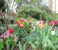 Spring in North Vancouver