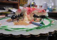 Kitchen Ants?