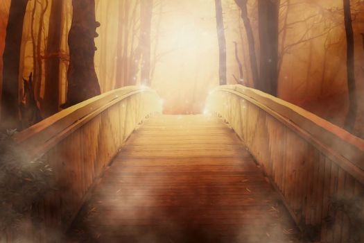 Golden Sunlight Forest Bridge