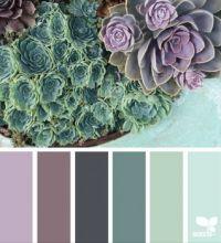 SucculentColor2_150