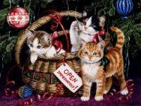 Christmas - Kittens in Basket