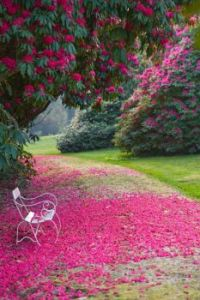 Tregothnan Gardens