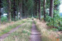 farmer's lane