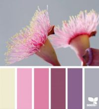ColorFlora_carolyn