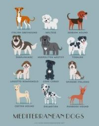 Do you know where your dog is from?? (8)