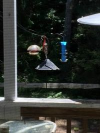 Matthew the cardinal came for a visit