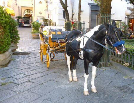 Friendly carriage horse in Sorrento