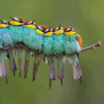 Colorful Caterpiller