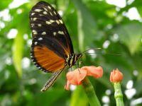 Motýl - ještě jeden :-)